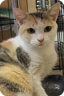 Domestic Shorthair Cat for adoption in Richand, New York - Ella