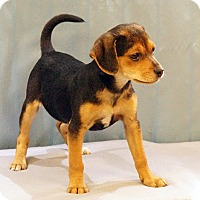 Adopt A Pet :: Frack - Maynardville, TN