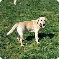 Adopt A Pet :: Murphy - Manchester, NH
