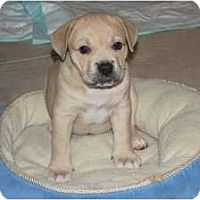 Adopt A Pet :: Tank - Minneola, FL
