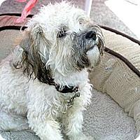Adopt A Pet :: Jasmine - Santa Monica, CA