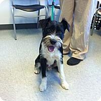 Adopt A Pet :: Toby in Houston - Houston, TX