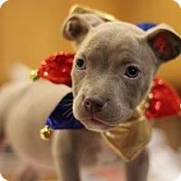 Adopt A Pet :: Zeus - Sacramento, CA
