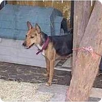 Adopt A Pet :: Mia - Groveland, FL