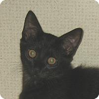 Adopt A Pet :: LOLLIPOP - Hamilton, NJ