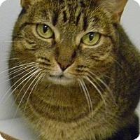 Adopt A Pet :: Niles - Hamburg, NY
