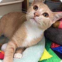 Adopt A Pet :: Cody - McDonough, GA