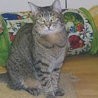Adopt A Pet :: Haley - Clayton, CA