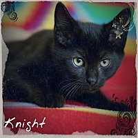 Adopt A Pet :: Knight - Germantown, OH