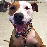 Adopt A Pet :: Roscoe Jenkins (RJ) - Hockessin, DE