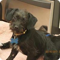 Adopt A Pet :: Kohl - Houston, TX