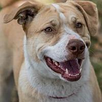 Hound (Unknown Type) Mix Dog for adoption in Loxahatchee, Florida - Armani