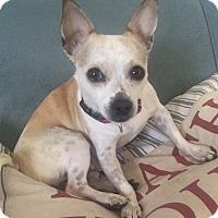 Adopt A Pet :: little boy in a pink Sock!!! - Ft Myers Beach, FL
