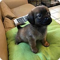 Adopt A Pet :: Coffee - Danbury, CT