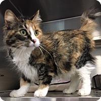 Adopt A Pet :: Callie - Oakdale, CA