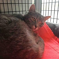 Adopt A Pet :: PRINNY - Canfield, OH