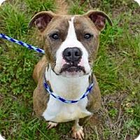 Adopt A Pet :: Nalu 49-17 - Cumming, GA