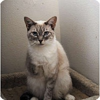 Adopt A Pet :: Paisley - Palmdale, CA