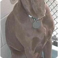 Adopt A Pet :: Cleo  **ADOPTED** - Eustis, FL