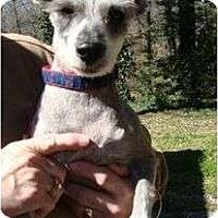 Adopt A Pet :: Anne - Staunton, VA