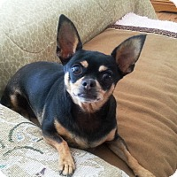 Adopt A Pet :: Lilly - Acton, CA