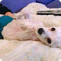 Adopt A Pet :: CHARLIE - East Hanover, NJ
