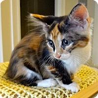 Adopt A Pet :: Anne Bonney - St. Louis, MO