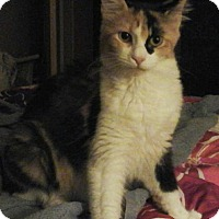 Adopt A Pet :: Serafina - Farmington, AR