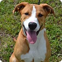 Adopt A Pet :: Rocko - Larned, KS