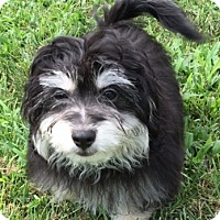 Adopt A Pet :: Huckleberry - Fairview Heights, IL
