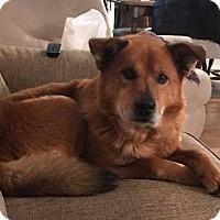 Adopt A Pet :: Brayden - Racine, WI