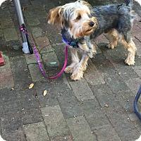 Adopt A Pet :: Zozo - Leesburg, FL
