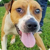 Adopt A Pet :: O'Malley - Kingston, TN