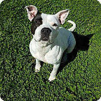 Adopt A Pet :: Nora - Hendersonville, NC