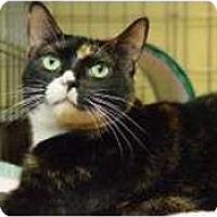 Adopt A Pet :: Pooja - New York, NY