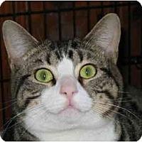 Adopt A Pet :: Rico - Medway, MA
