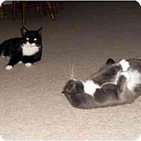 Adopt A Pet :: Mittens and Stuart - Alexandria, VA
