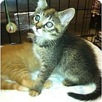 Adopt A Pet :: Athena - Clay, NY