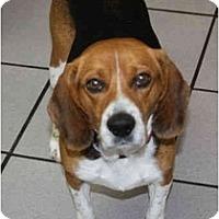 Adopt A Pet :: Georgiana - Portland, OR