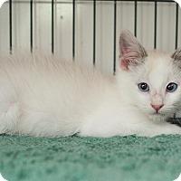 Adopt A Pet :: Fiery - Shelton, WA