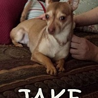 Adopt A Pet :: Jake - Chicagoland area, IL