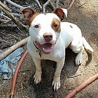Adopt A Pet :: Podrick - Detroit, MI