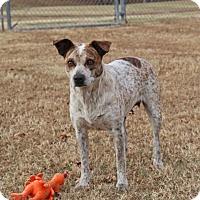Adopt A Pet :: Kami - Savannah, TN
