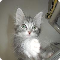 Adopt A Pet :: Chianina - Mission Viejo, CA