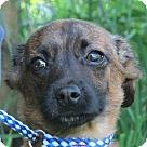 Adopt A Pet :: Gino
