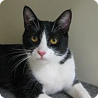 Adopt A Pet :: BAT MAN - Brea, CA