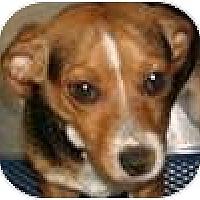 Adopt A Pet :: Enzo - Hamilton, ON