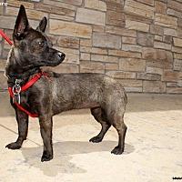 Adopt A Pet :: Minion - Newcastle, OK