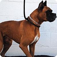Adopt A Pet :: CONRAD - Los Angeles, CA