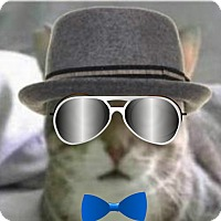 Adopt A Pet :: Buddy - Mellow Fellow FIV 25.0 - Rochester, NY